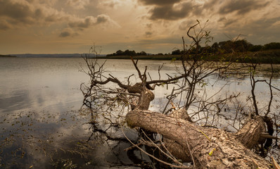 Dried tree and lake. nature landscape autumn