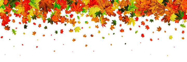 Autumn leaves isolated. November falling pattern background. Sea