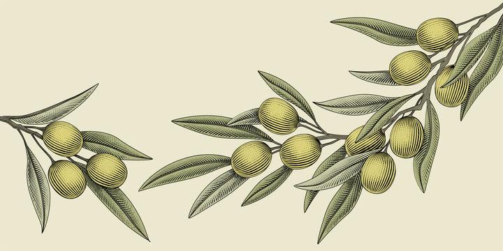 Woodcut style olive illustration