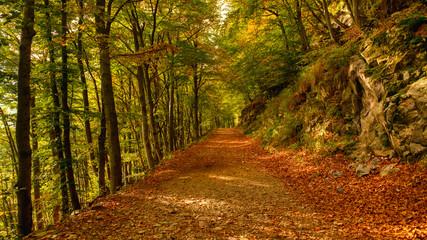 Photo sur Plexiglas Route dans la forêt road in the forest