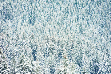 Snow-covered trees in winter mountains. Beautiful winter background