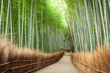Bamboo Grove Forest Kyoto Japan