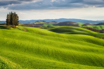 Foto op Plexiglas Pistache Spring fields in Tuscany / Amazing Tuscany landscape with green rolling hills in spring sunny morning