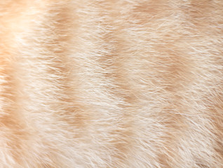 Fur cat white and light brown patterns  , animal abstract texture background