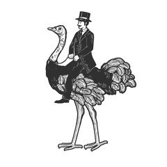Old fashioned gentleman riding an ostrich sketch engraving vector illustration. T-shirt apparel print design. Scratch board style imitation. Black and white hand drawn image.
