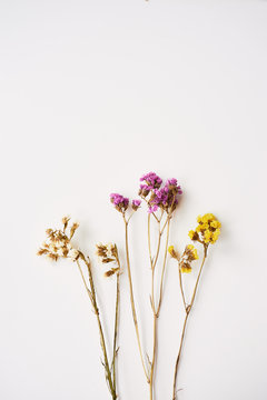 Dried wild flowers on white table background top view.