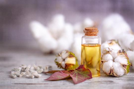 Cotton plant and cotton oil