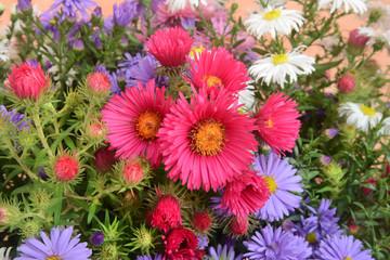 Blumen 1154