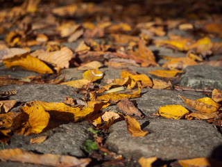 Brown leaves on sunny cobblestone walkway in October