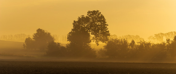 Autumn rural landscape with morning mist ,trees and beautiful wavy fields Fototapete