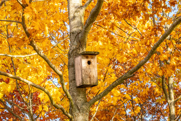 Bird house on the maple tree
