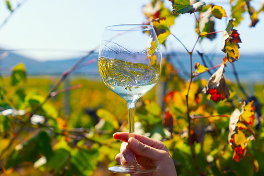 Wine in front of vineyards in Tuscany, Italy.