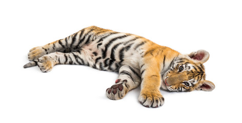 Foto op Canvas Tijger Two months old tiger cub lying against white background