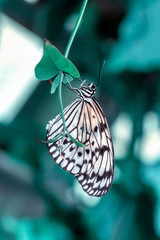 Self adhesive Wall Murals Butterfly Beautiful butterfly sitting on flower in a summer garden