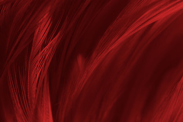 Wall Mural - Beautiful red feather pattern texture background