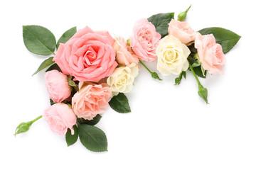 Beautiful rose flowers on white background