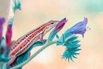 Beautiful lizard - Stock Image