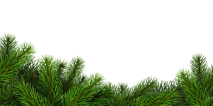 A border of realistic spruce branches. Design element for Christmas or New Year greeting card.