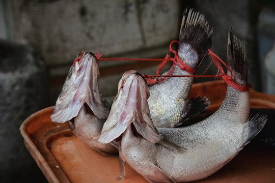 Tied up fish at Asian fish market
