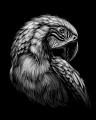 Macaw parrot. Hand-drawn, sketchy, art portrait of a macaw parrot on a black background.
