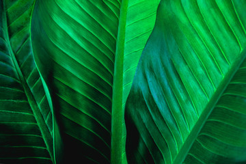 abstract green leaf texture, nature background, tropical leaf Wall mural