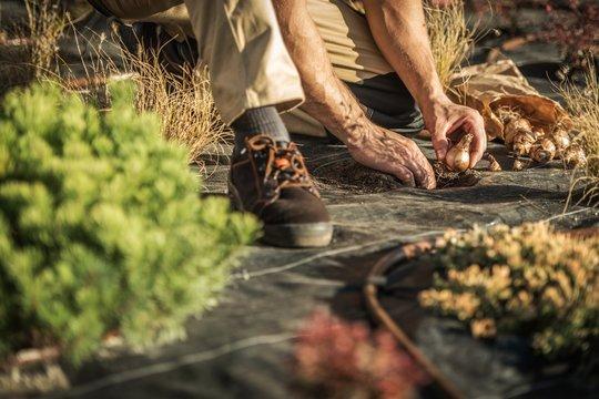 Gardener Planting New Flowers
