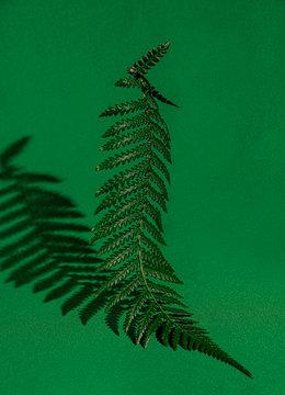 Close up of ostrich fern