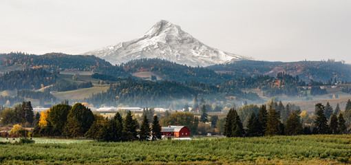 View of a red barn and orchard with Mt Hood in the background