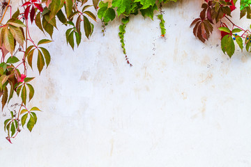 Wall Mural - White garden wall background