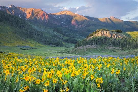 Stunning Sunflower Sunset