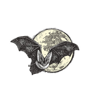Vector vintage illustration of bat flying against the moon. Hand drawn Halloween symbol in engraving style
