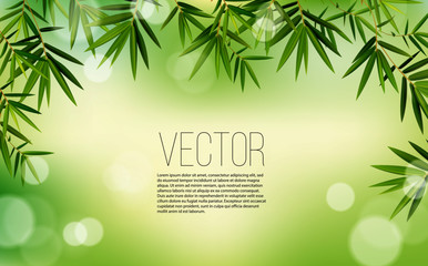 Green bamboo leaves. Vector illustration