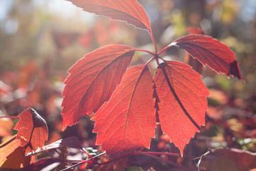 autumn leaves falling leaf tree forest orange