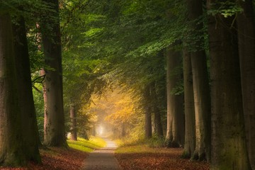 Wall Murals Road in forest Pathway in the middle of a forest with big and green leafed trees