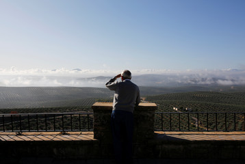 A man looks at olive groves in Porcuna, southern Spain
