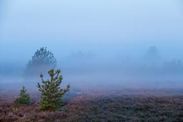 A heathland in the early morning in the fog. Concept: Landscapes in Germany
