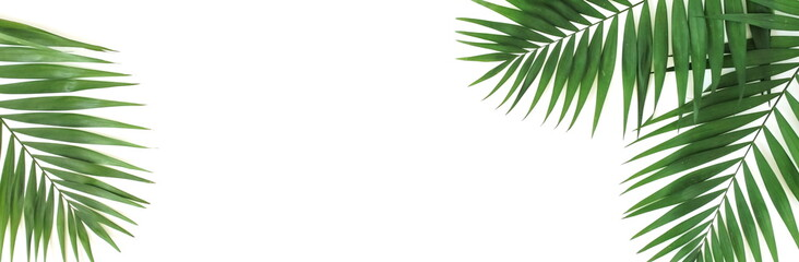 Self adhesive Wall Murals Palm tree tropical green palm leaves , branches pattern isolated on a white background. banner. top view.copy space.abstract.