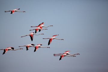 Foto op Canvas Flamingo Flamingos