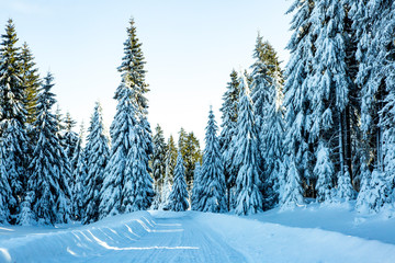 Winter scenery with snowy street Wall mural