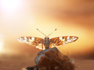 Beautiful butterfly resting on a stone at sunset