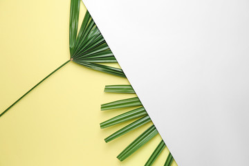 Wall Mural - Fresh tropical leaves and blank card on color background