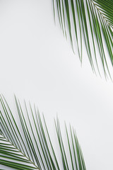 Wall Mural - Fresh tropical leaves on light background