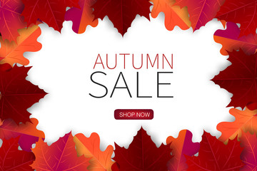 Autumn sale banner design concept with shop now button. Maple red and orange leaves over white background. Free room for typography text. vector illustration.