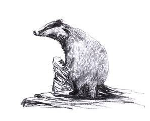 Charcoal drawing. Badger stands leaning on a tree