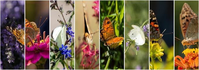 Collage of butterfly photos 8 pieces in one line with divider