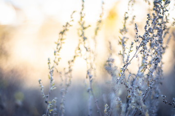 meadow flowers in early sunny fresh autumn morning. Vintage autumn landscape. Shallow depth of field, against the sun.