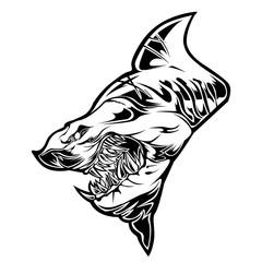 shark head angry vector illustrator