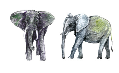 Elephants,  side and front view, hand painted watercolor illustration design element for invitation, card, print, posters