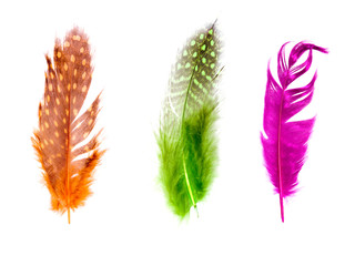 set of color bird feathers isolated