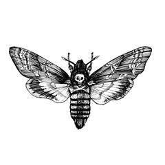 Butterfly Acherontia atropos , dead head, adam's head. Black and white graphics handmade.